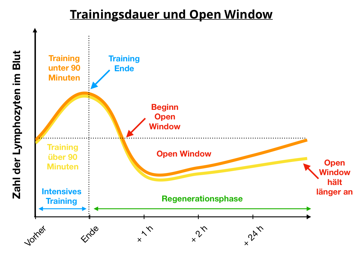 open window effekt trainingsdauer